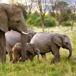 Elefanten in Okambara