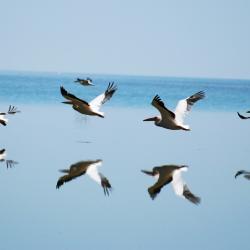 Nata Bird Sanctuary by Kalahari Calling
