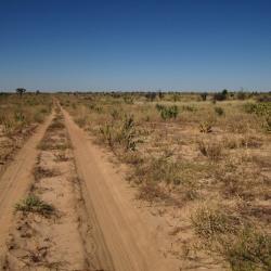 Unterwegs in der zentralen Kalahari