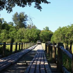 Knüppelbrücke im Moremi Game Reserve