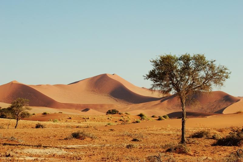 In der Namib Wüste