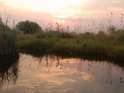Per Boot durch das Okavango Delta