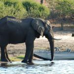 Chobe Waterfront - Selbstfahrerreise Kalahari Calling