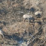 Elefanten im Okavango Delta - Kalahari Calling