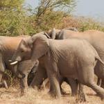 Elefanten in der Tuli Wilderness - Kalahari Calling