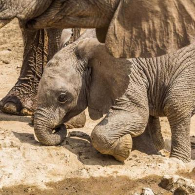 Baby Elephant - Hobatere Concession