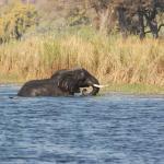 Elefanten durchqueren den Chobe Fluss