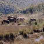 Elefanten kommen zum Trinken an den Fluß