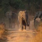 Tierischer Gegenverkehr - Welgevonden Game Reserve
