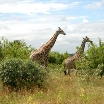 Wildtiere erleben - Namibia Rundreise