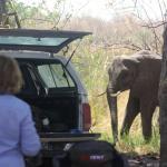Camping mit Elefantenbesuch
