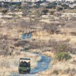 Kwando Tau Pan Camp - Lion Tracking