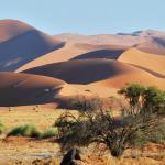 Namibia Rundreise - in der Namib Wüste