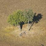 Okavango Delta Botswana - Eindrücke aus der Luft