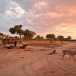 Auf Safarifahrt im Hwange NP