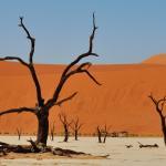 Selbstfahrer Reise Namibia - Das Dead Vlei