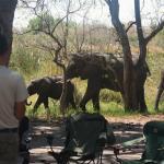 Elefanten Besuch Third Bridge Campsite, Moremi
