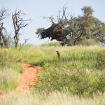 Trans Kalahari Walk - Namibia