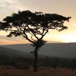 Abendstimmung im Welgevonden Game Reserve © Inzalo Safari Lodge