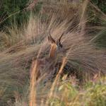 Feuchtgebiet im Welgevonden Game Reserve