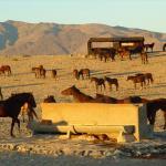 Wildpferde bei Gharub, Aus