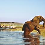 Ein Elefant überquert den Chobe River