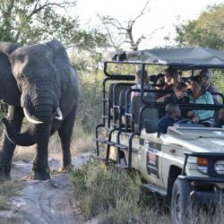 Begegnung mit Giganten im Busch