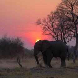 Botswana Safari - Moremi Game Reserve