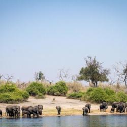 Bootstour auf dem Chobe