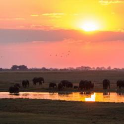 Chobe Landschaft am Fluss
