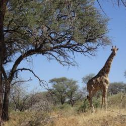 Namibia Rundreise - Düsternbrook