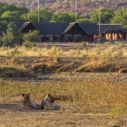 Löwen vor der Hobatere Lodge