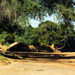 Limpopo Flussbett am Molema Camp - hier sind kleine Fußwanderungen erlaubt