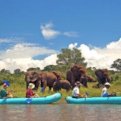 Wildtierbeobachtung vom Kanu aus