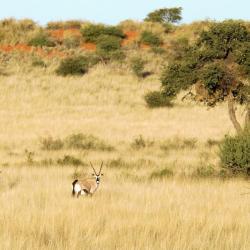 Landschaft in der Kalahari - Selbstfahrer Reise Namibia