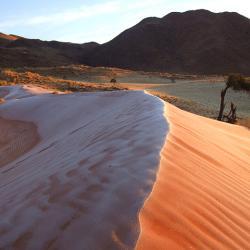 Namib Rand Reserve - Tok Tokkie Trail