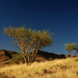 Rooisand Desert Lodge Landschaft