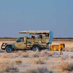 Okaukuejo Camp, Etosha Safarifahrt