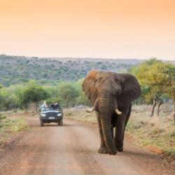 Safari Fahrt im Manyoni Game Reserve