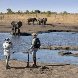 Somalisa Expeditions Safari zu Fuß