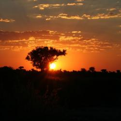 Sonnenuntergang in der Kalahari - Selbstfahrer Camping Reise in Botswana