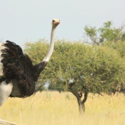 Als Selbstfahrer unterwegs in Botswana