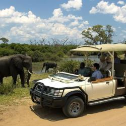 Chobe River Front Game Drive