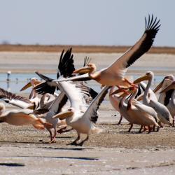Pelikane im Nata Bird Sanctuary - Bild von Kalahari Calling