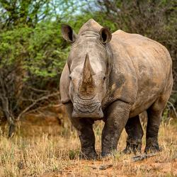 Unterwegs auf dem Rhino Drive