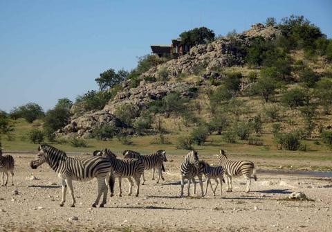 Zebras am Dolmietpunt Wasserloch