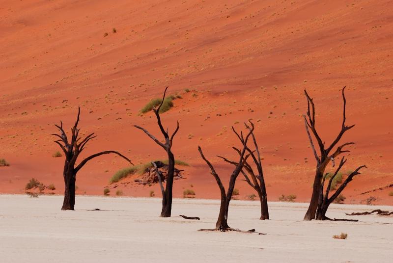 Das Dead Vlei - Rundreise mit Kalahari Calling