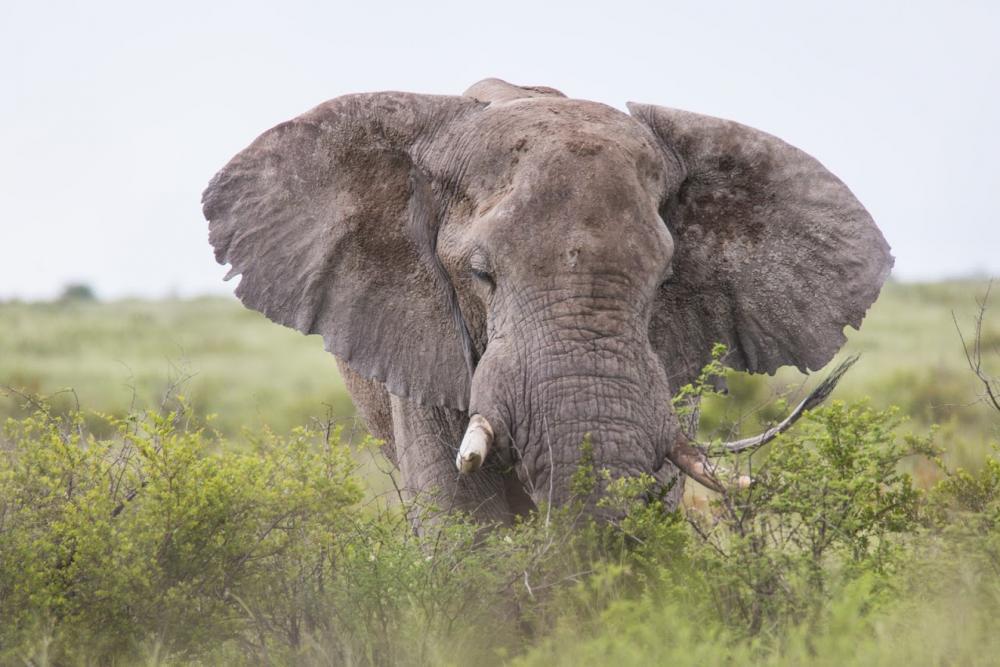 Elefant am Boteti River - Unterwegs als Selbstfahrer mit Kalahari Calling