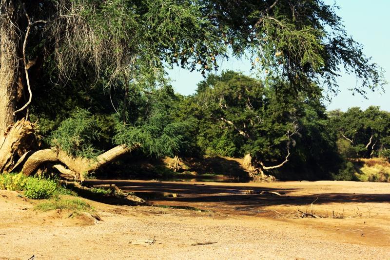 Am Limpopo Fluss, der die Grenze zwischen Botswana und Südafrika markiert