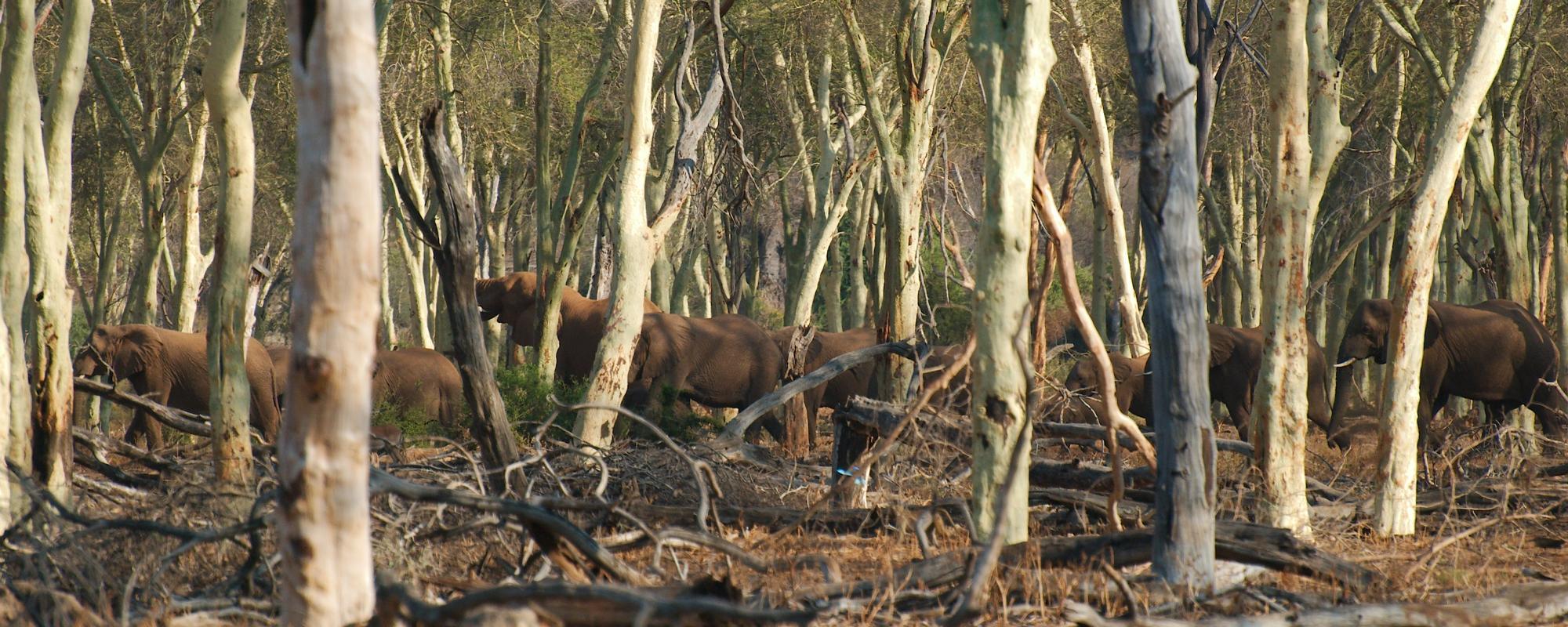 Elefanten im Krüger Nationalpark in Südafrika